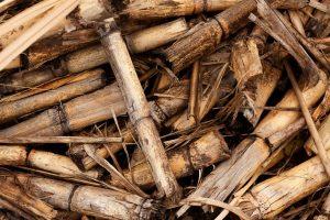 In het Roaring River Park zijn nog de restanten te zien van de suikerrietplantage die er vroeger was.