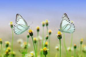 Op Jamaica zijn veel insecten te bekijken zoals vlinders.