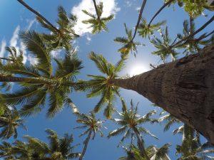 In het Royal Palm Reserve zijn heel veel palmbomen te bewonderen.