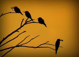 Als je naar Jamaica gaat, moet je beslist gaan vogelspotten.