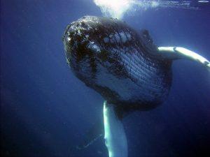 In het Negril Marine Park kun je walvissen spotten.