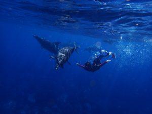 Zwemmen met dolfijnen op Jamaica is zeker mogelijk.