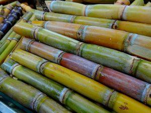 Suikerriet werd veel op de plantages verbouwd. Op iedere plantage stond een plantagehuis.