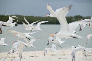 Morant Bay is een mekka voor vogelaars