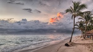De flora op Jamaica is van een grootste schoonheid. Een van de mooiste bomen die op het eiland groeit palm