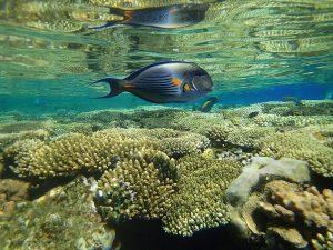 Het koraalrif van Ocho Rios is van een wonderbaarlijke schoonheid.