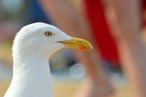 Oracabessa is voor voor vogelliefhebbers een paradijs.
