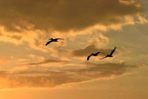 In de overige plaatsen kun je veel verschillende soorten vogels spotten