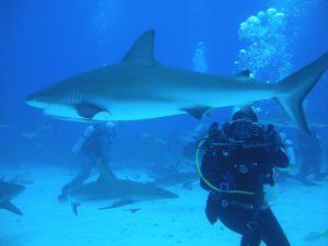 Duiken met haaien op Jamaica is heel bijzonder.