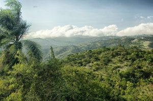 Tokkelen is een hele leuke bezigheid op Jamaica.